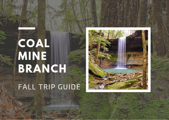 Coal Mine Branch Falls in Bankhead National Forest