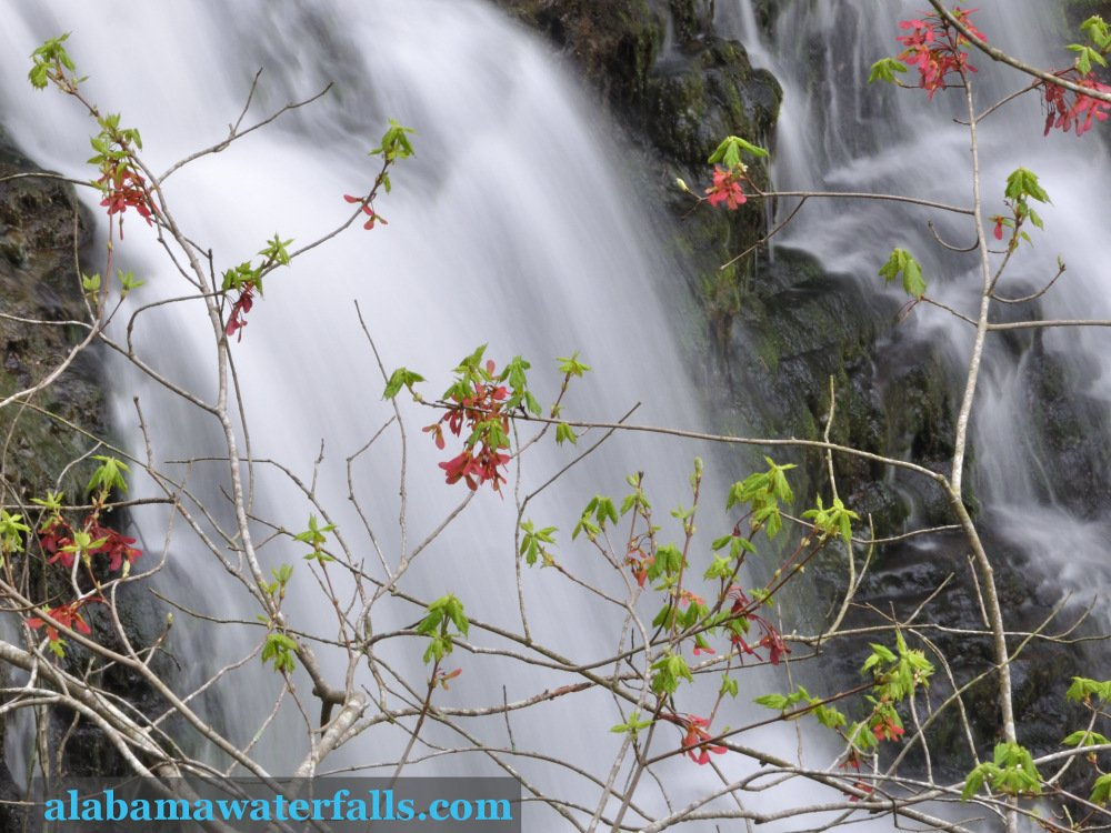 Spring emerges at Thompson Falls near Lake Guntersville in Alabama