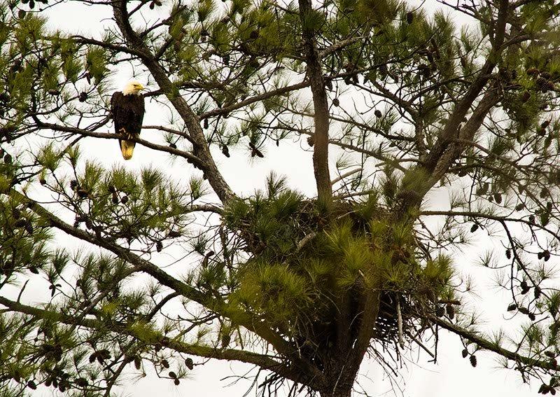 Jimmy Sims Birding Trail